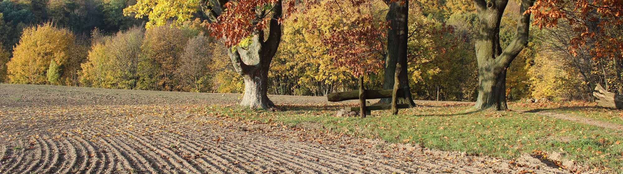 Stadtgut Görlitz Herbstfeld.jpg