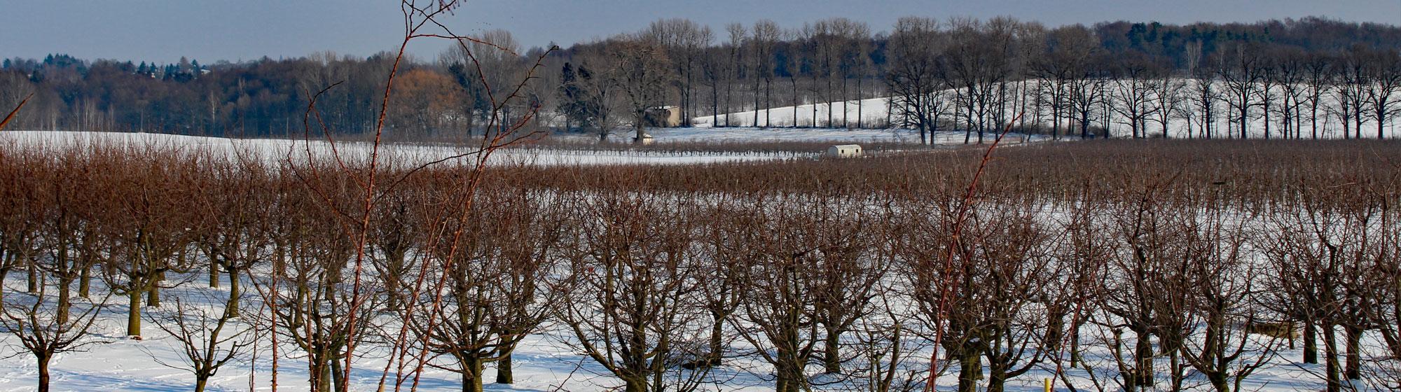 Stadtgut Görlitz Winter-Apfelanlage.jpg